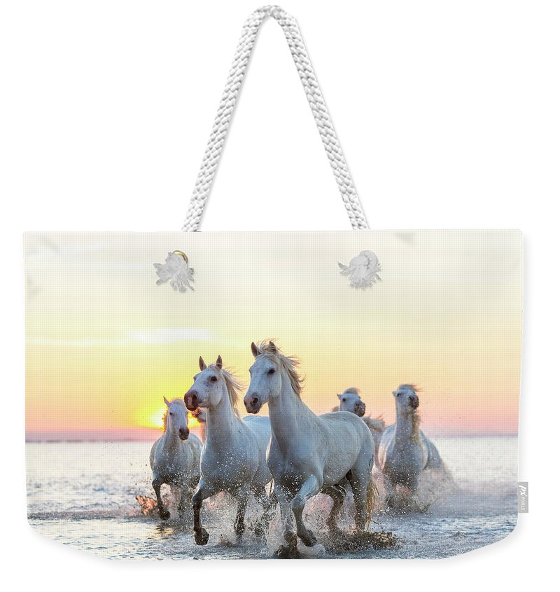 Animal Themes Weekender Tote Bag featuring the photograph Camargue White Horses Running In Water by Peter Adams