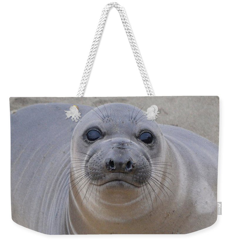 Cambria Weekender Tote Bag featuring the photograph Cambria Baby Seal by Christine Owens