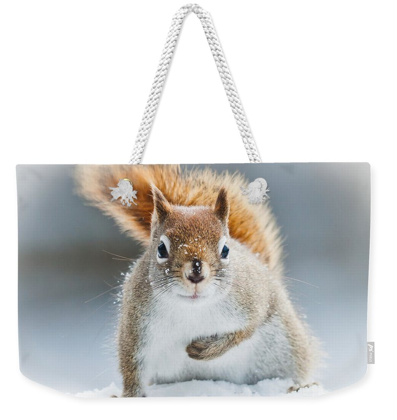 Squirrel Weekender Tote Bag featuring the photograph Can I Have Some More? by Cheryl Baxter