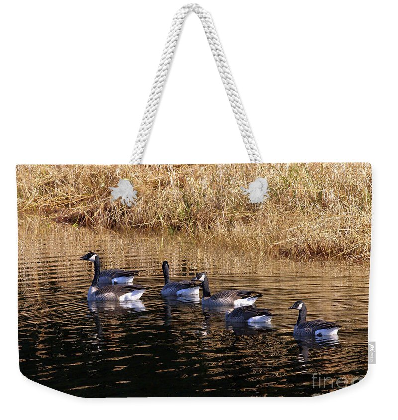 Canada Geese Weekender Tote Bag featuring the photograph Canada Geese by Sharon Talson