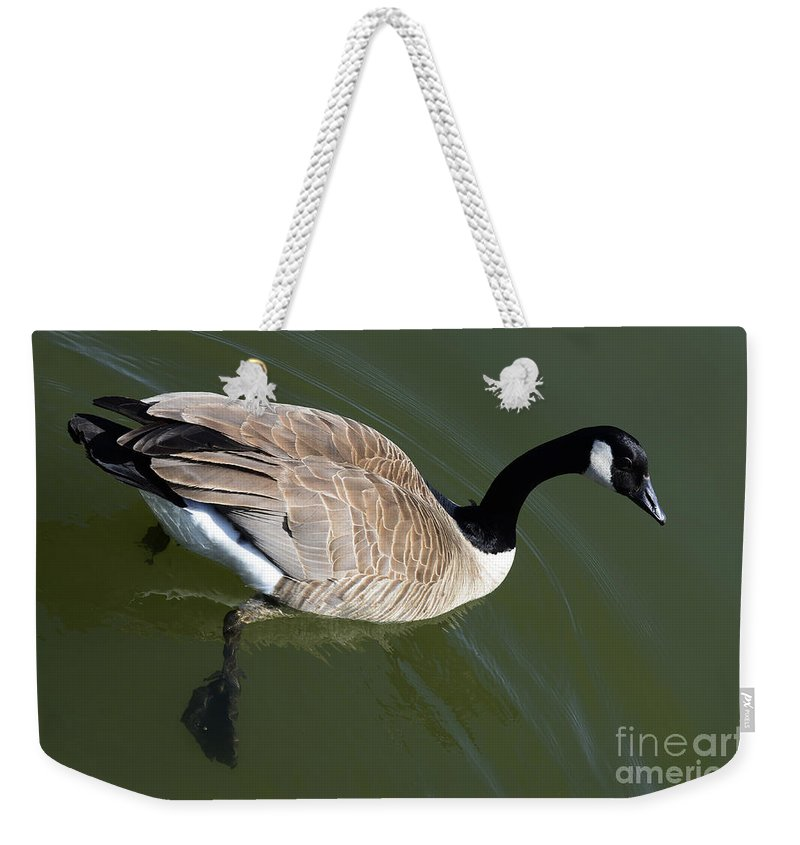 Canada Goose Weekender Tote Bag featuring the photograph Canada Goose by Bob Christopher