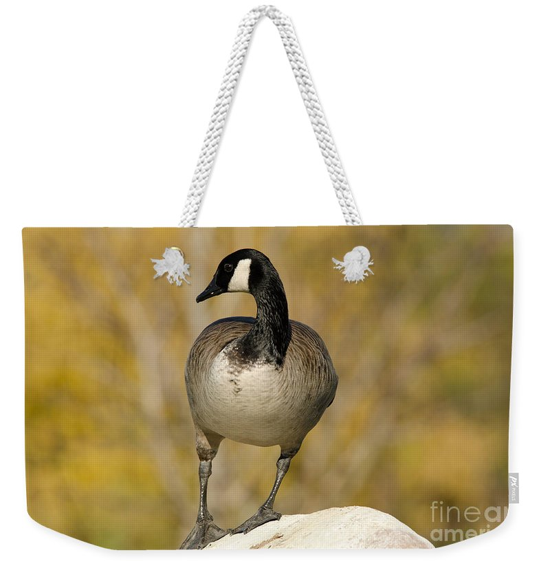 Canada Weekender Tote Bag featuring the photograph Canada Goose by Les Palenik
