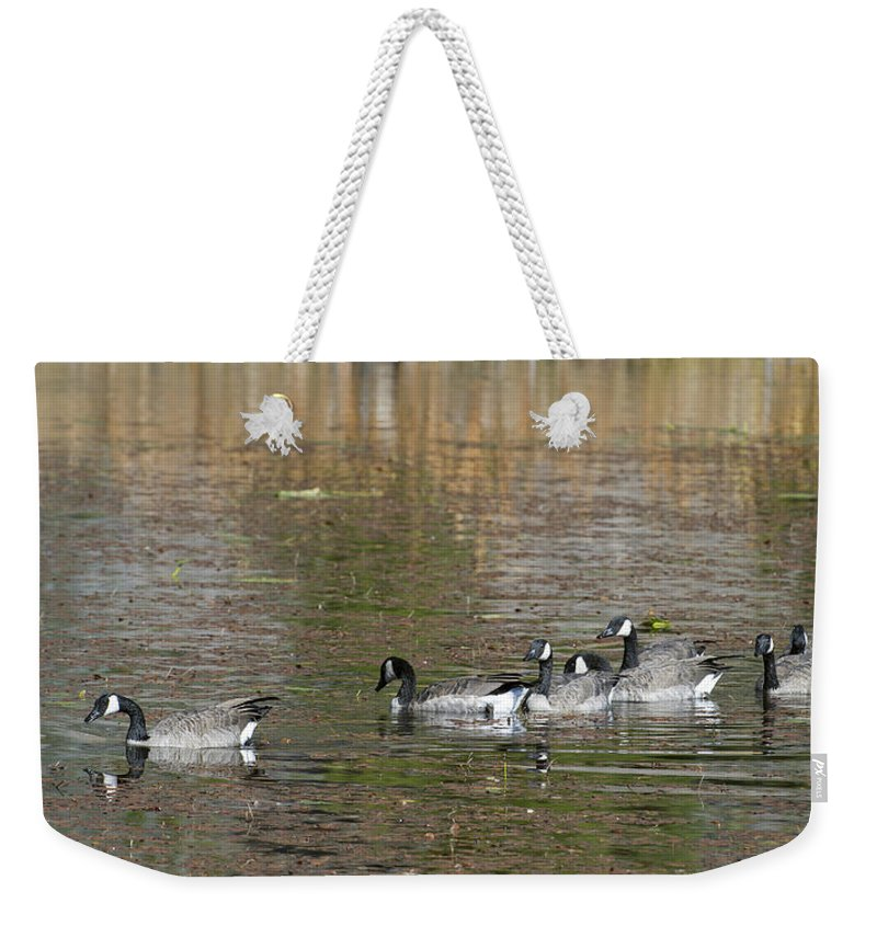 Canadian Weekender Tote Bag featuring the photograph Canadian Geese by Gary Langley