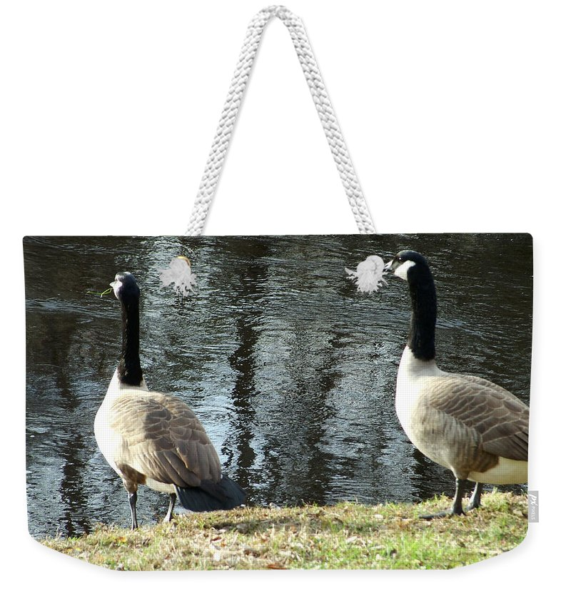 Canadian Weekender Tote Bag featuring the photograph Canadian Geese On Spaulding Pond by Geoffrey McLean