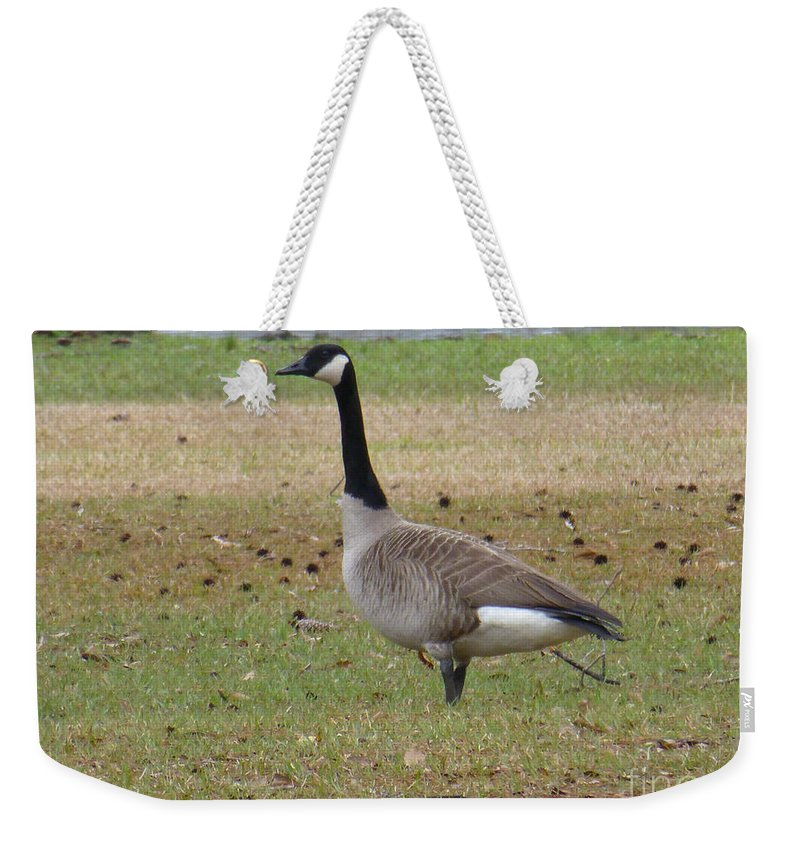 Tree Weekender Tote Bag featuring the photograph Canadian Goose Strut by Joseph Baril