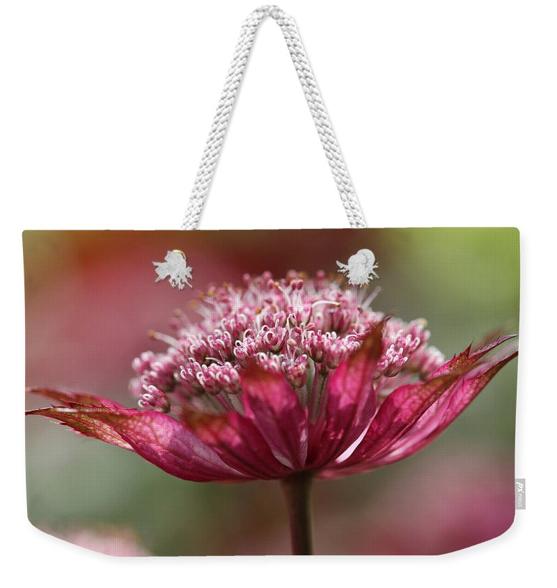 Masterwort Weekender Tote Bag featuring the photograph Botanica .. Candy by Connie Handscomb