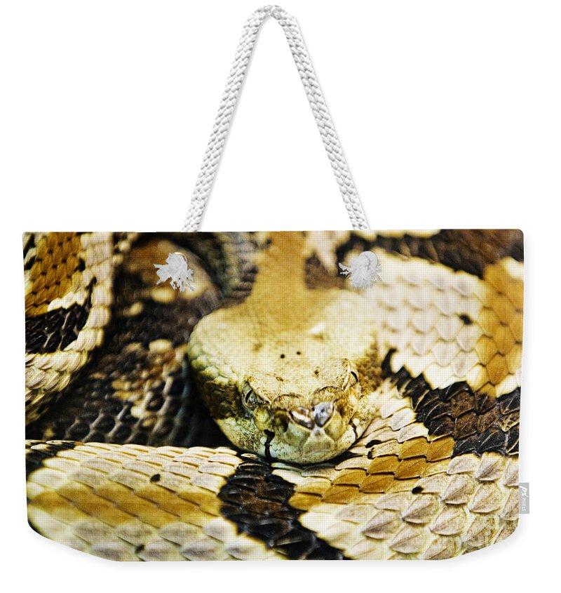Rattlesnake Weekender Tote Bag featuring the photograph Canebrake by Scott Pellegrin
