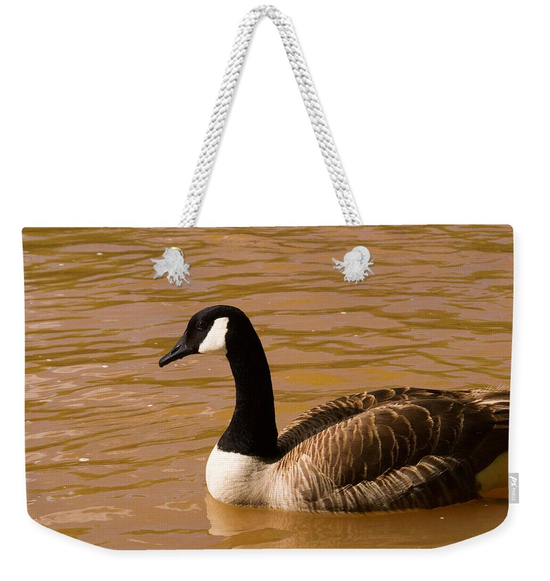 Goose Weekender Tote Bag featuring the photograph Canidian Goose On Golden Pond by Douglas Barnett