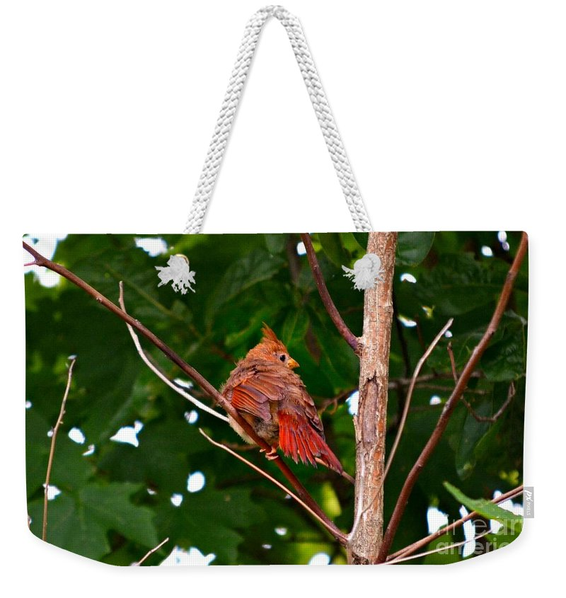 Northern Cardinal Baby Bird Weekender Tote Bag featuring the photograph Cardinal Bird Baby by Peggy Franz