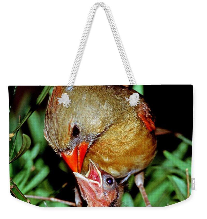 Cardinal Weekender Tote Bag featuring the photograph Cardinal by Millard H. Sharp