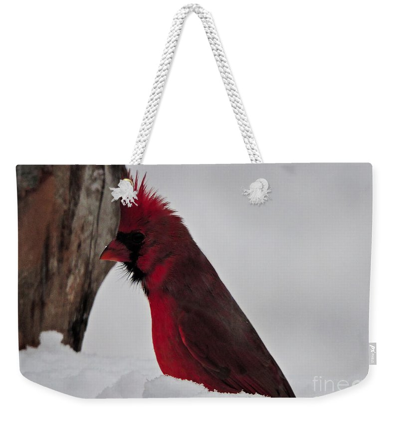 Cardinal Weekender Tote Bag featuring the photograph Cardinal 1 by Mim White