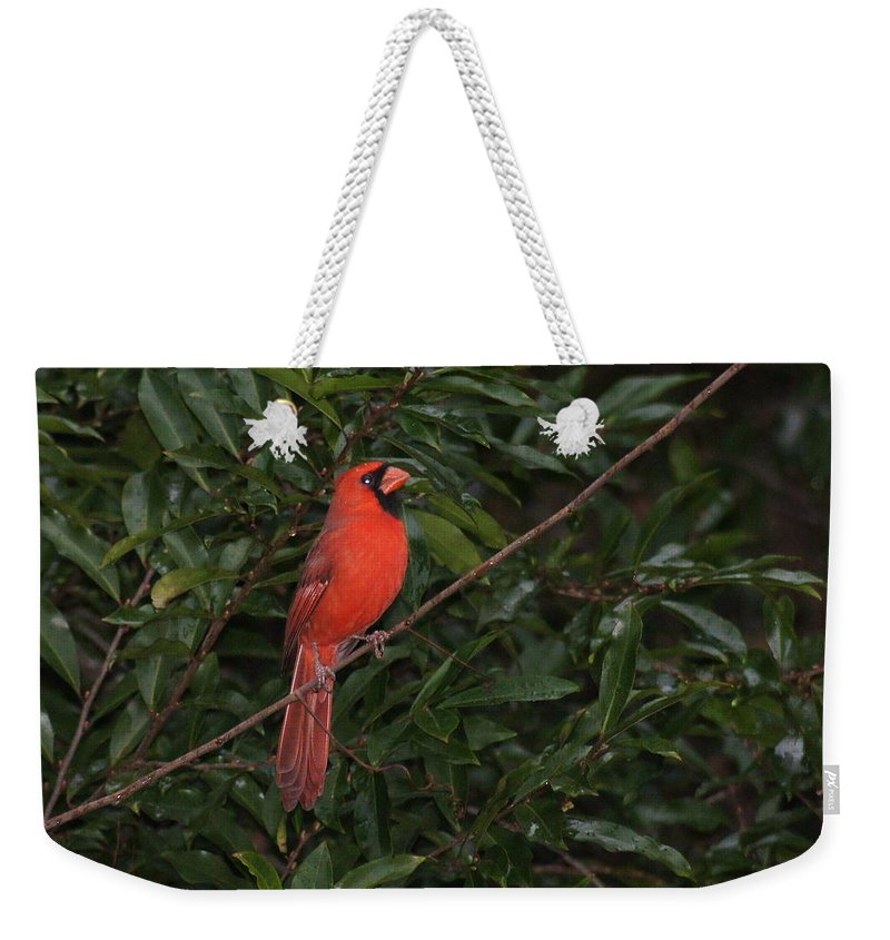 Bird Weekender Tote Bag featuring the photograph Cardinal by Paul Wilford