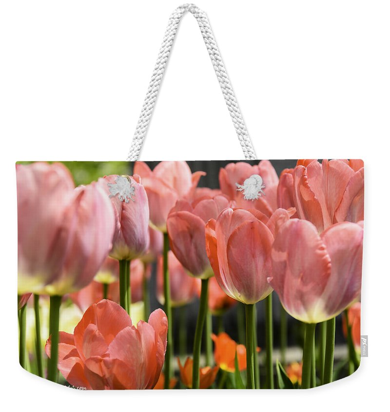 Usa Weekender Tote Bag featuring the photograph Caring Pink Tulip Time by LeeAnn McLaneGoetz McLaneGoetzStudioLLCcom