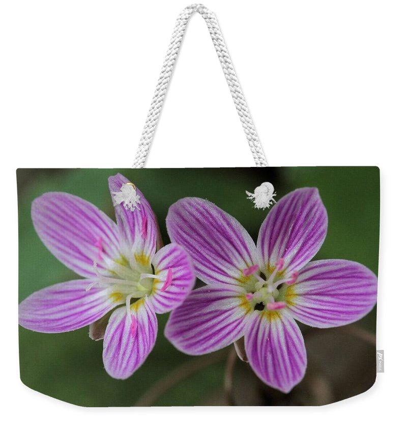 Carolina Spring Beauty Weekender Tote Bag featuring the photograph Carolina Spring Beauty Duo by Doris Potter