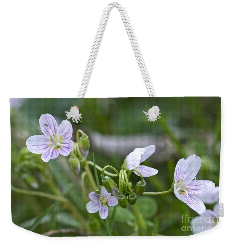 carolina Spring Beauty Weekender Tote Bag featuring the photograph Carolina Spring Beauty - Wide-leaved Spring Beauty - Claytonia Caroliniana by Mother Nature