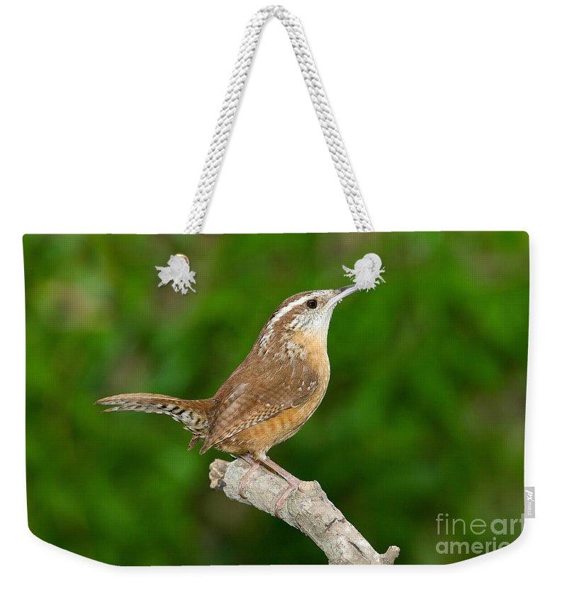 Animal Weekender Tote Bag featuring the photograph Carolina Wren by Anthony Mercieca