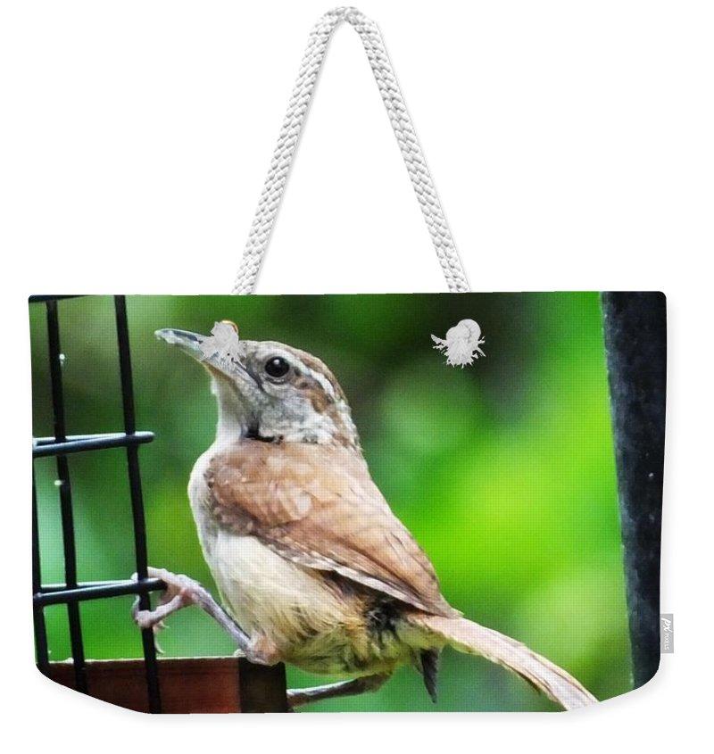 Bird Weekender Tote Bag featuring the photograph Carolina Wren by Lizi Beard-Ward