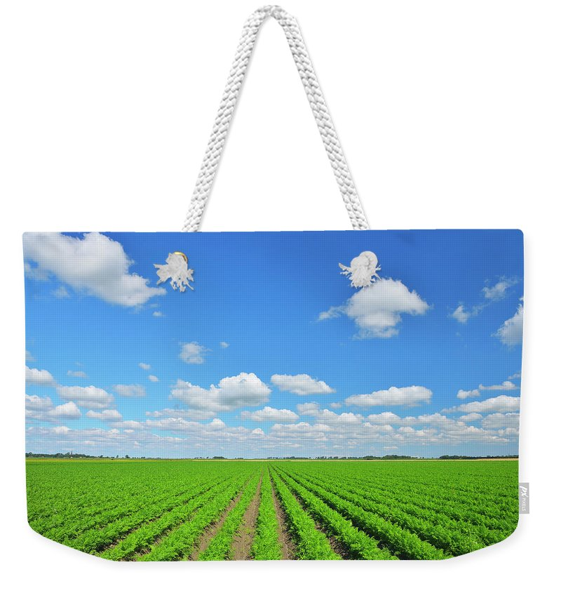 Tranquility Weekender Tote Bag featuring the photograph Carrot Field by Raimund Linke