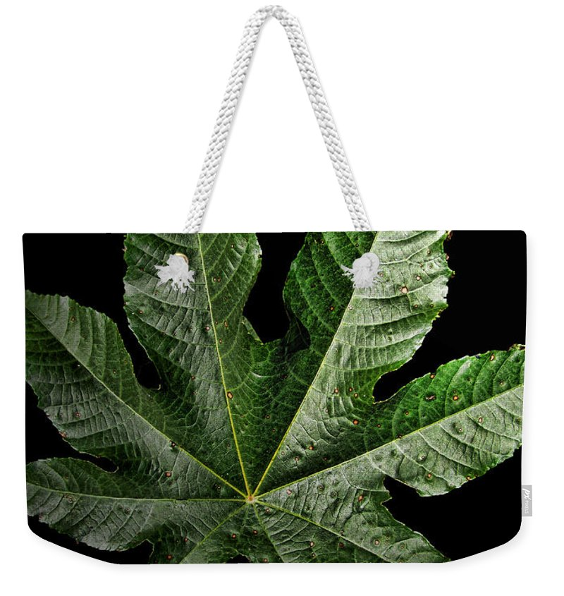 Nature Weekender Tote Bag featuring the photograph Castor Bean Leaf by Debbie Portwood