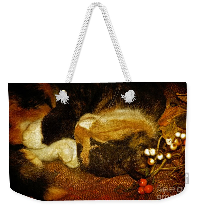 Cat Weekender Tote Bag featuring the photograph Cat Catnapping by Lois Bryan
