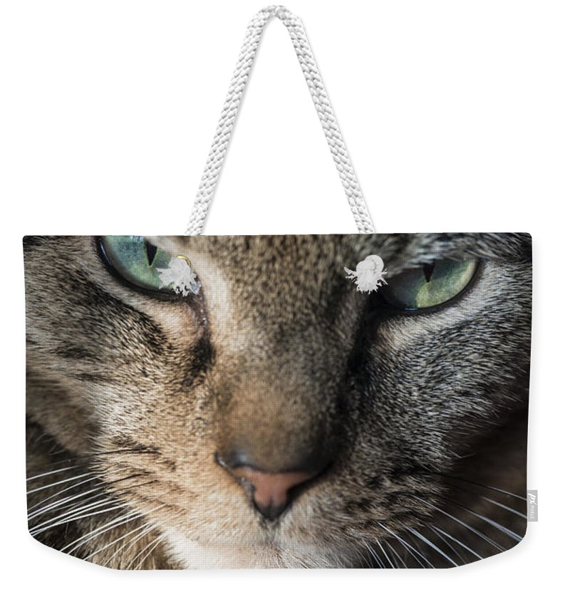 Animal Weekender Tote Bag featuring the photograph Cat Eyes by John Greim