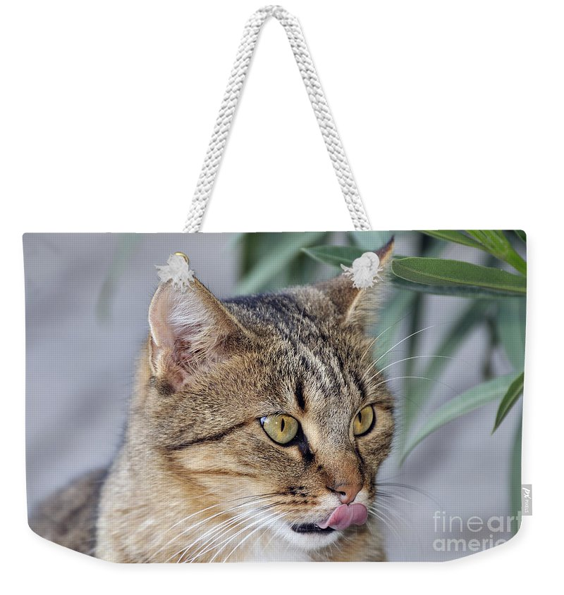 Cat; Cats; Feline; Tabby; Animal; Sit; Sitting; Rest; Resting; Free; Alone; Greece; Hellas; Greek; Hellenic; Athens; Yellow; Eyes; Portrait; Tongue; Pink; Red Weekender Tote Bag featuring the photograph Cat In Athens by George Atsametakis