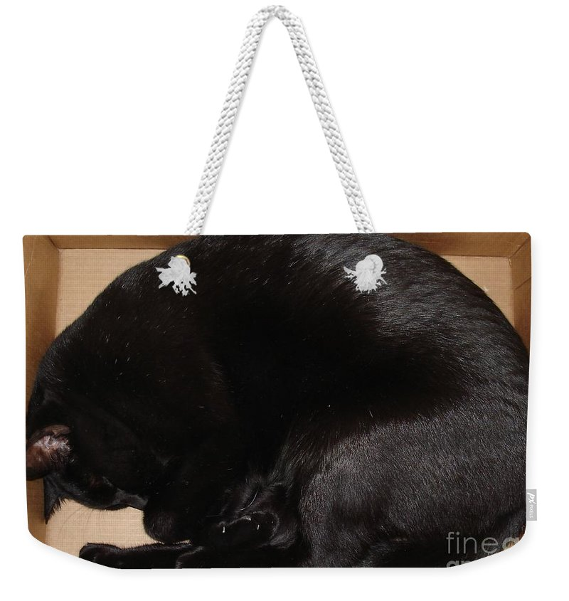 Cat Weekender Tote Bag featuring the photograph Cat In The Box by Kerri Mortenson