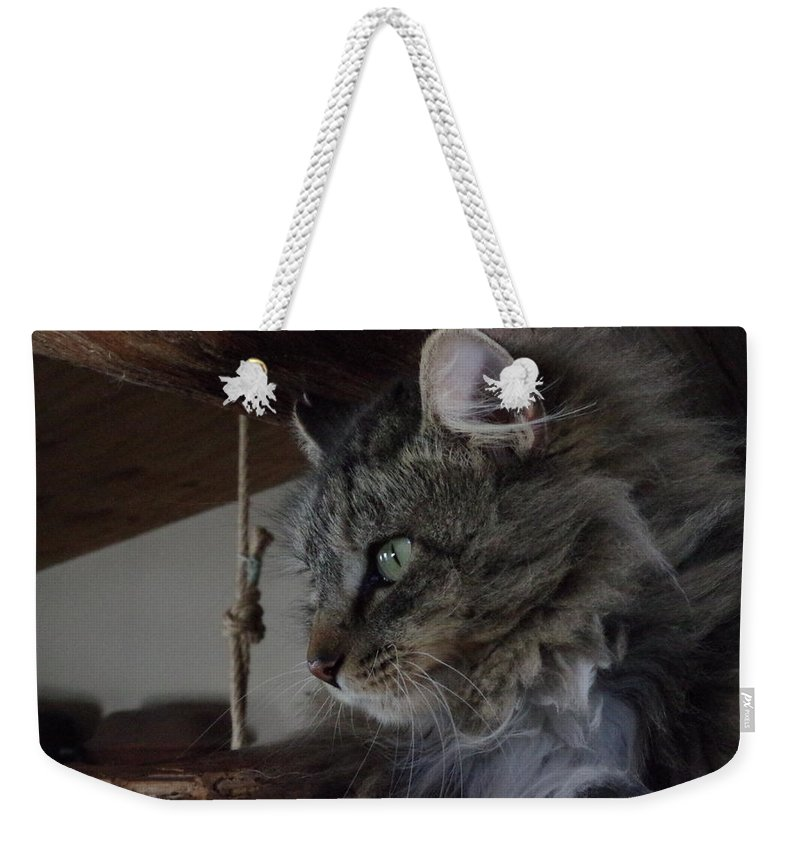 Photograph Weekender Tote Bag featuring the photograph Cat by Martin Bellmann