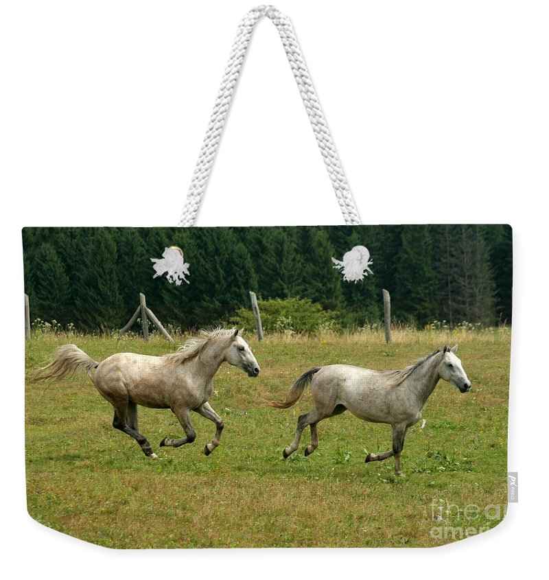 Grey Horse Weekender Tote Bag featuring the photograph Catch Me If You Can by Angel Tarantella