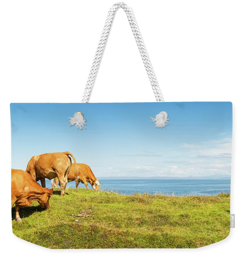 Water's Edge Weekender Tote Bag featuring the photograph Cattle Grazing In Picturesque Meadow by Fotovoyager