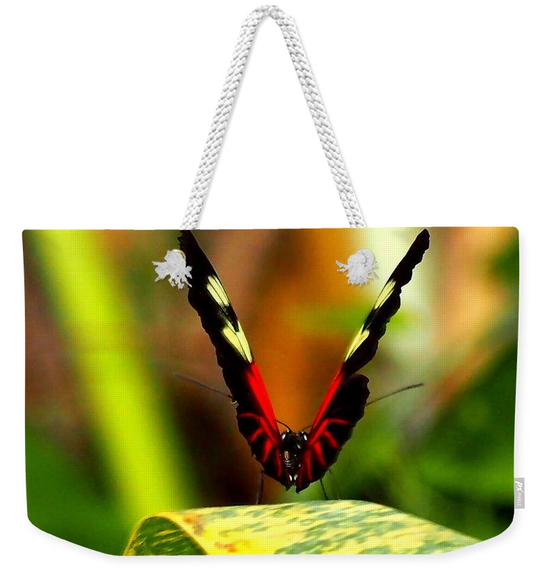 Nature Weekender Tote Bag featuring the photograph Cattleheart Butterfly by Amy McDaniel