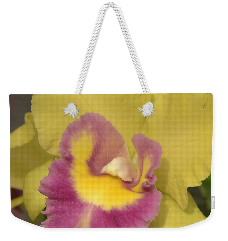 Orchid Weekender Tote Bag featuring the photograph Cattleya 4699 by Terri Winkler