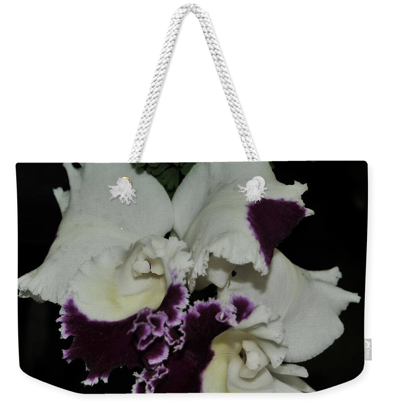 Orchid Weekender Tote Bag featuring the photograph Cattleya Moscombe 'the King' 3 Of 3 by Terri Winkler