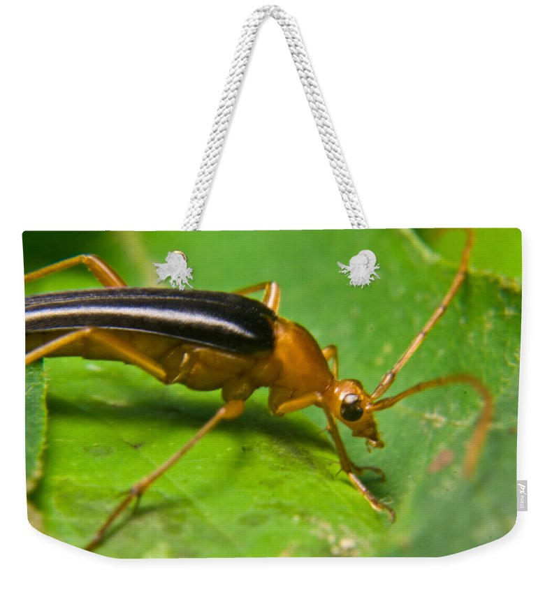 Beetle Weekender Tote Bag featuring the photograph Caught by Douglas Barnett