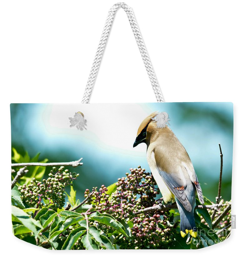 Cedar Waxwing Weekender Tote Bag featuring the photograph Cedar Waxwing Pose by Cheryl Baxter