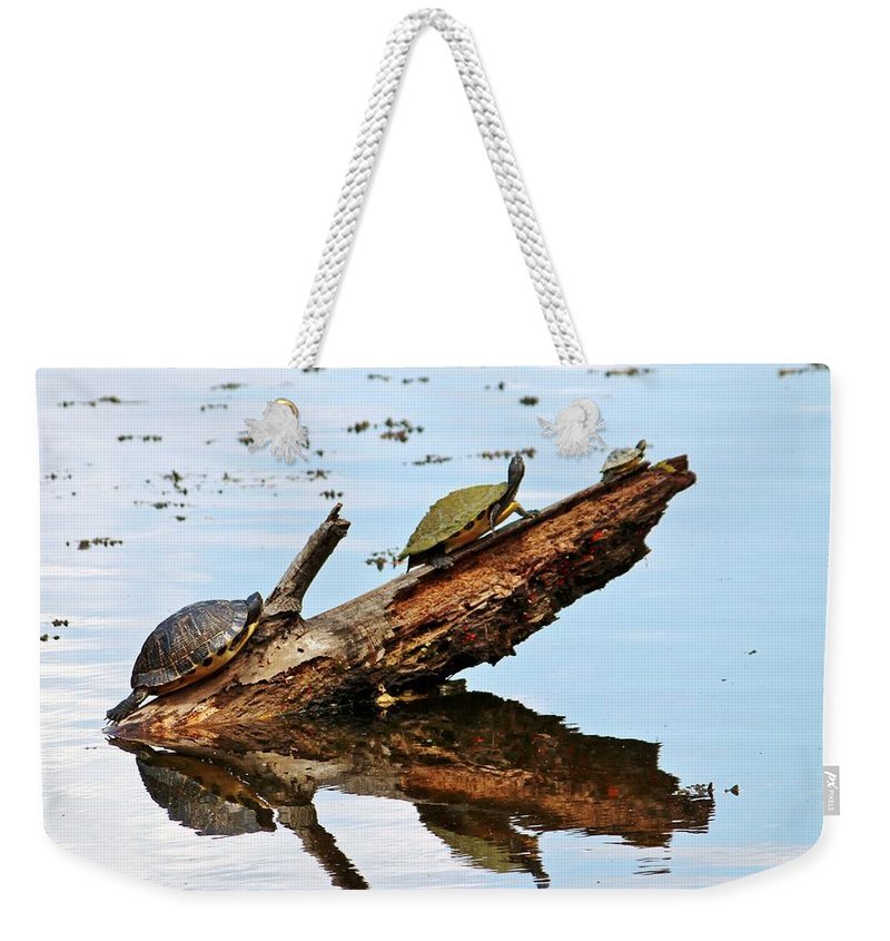 Celebrate Weekender Tote Bag featuring the photograph Happy Family Of Turtles by Cynthia Guinn