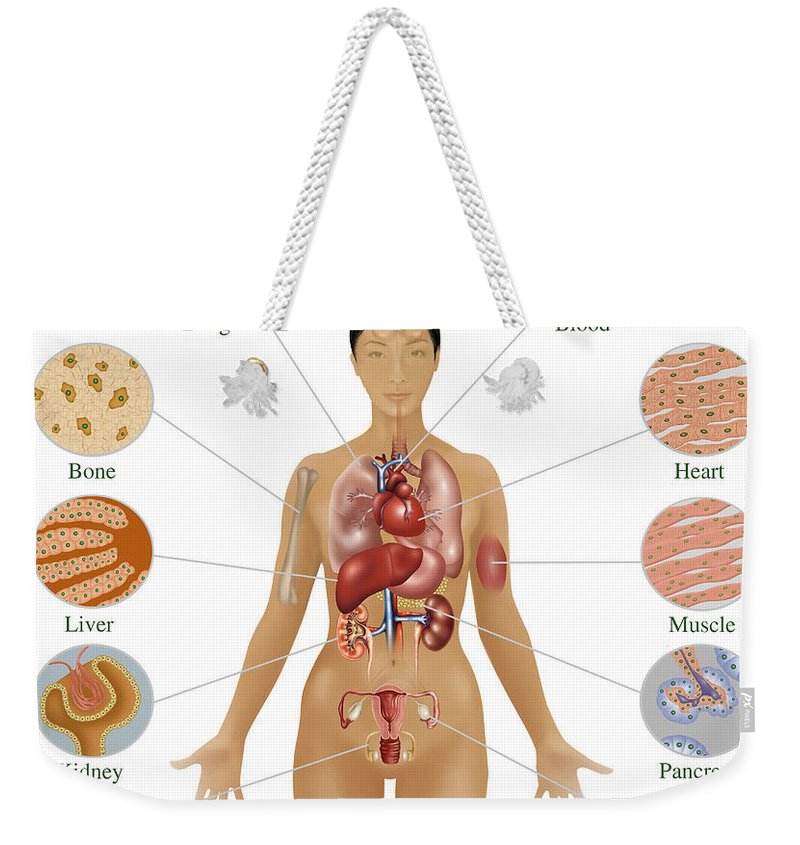 Science Weekender Tote Bag featuring the photograph Cells Of The Body by Gwen Shockey