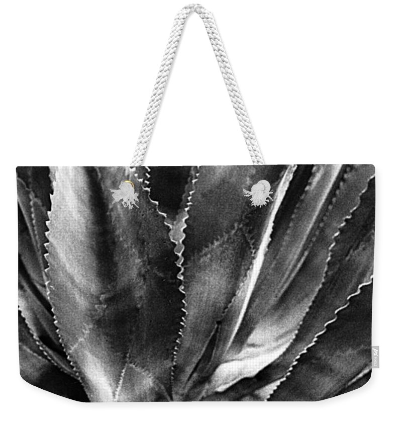 Plants Of The Southwest Weekender Tote Bag featuring the photograph Century Plant I I by Jim Smith