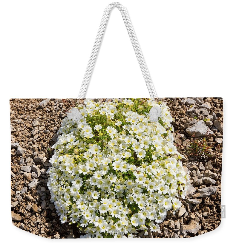 Background Weekender Tote Bag featuring the photograph Cerastium Uniflorum by Antonio Scarpi