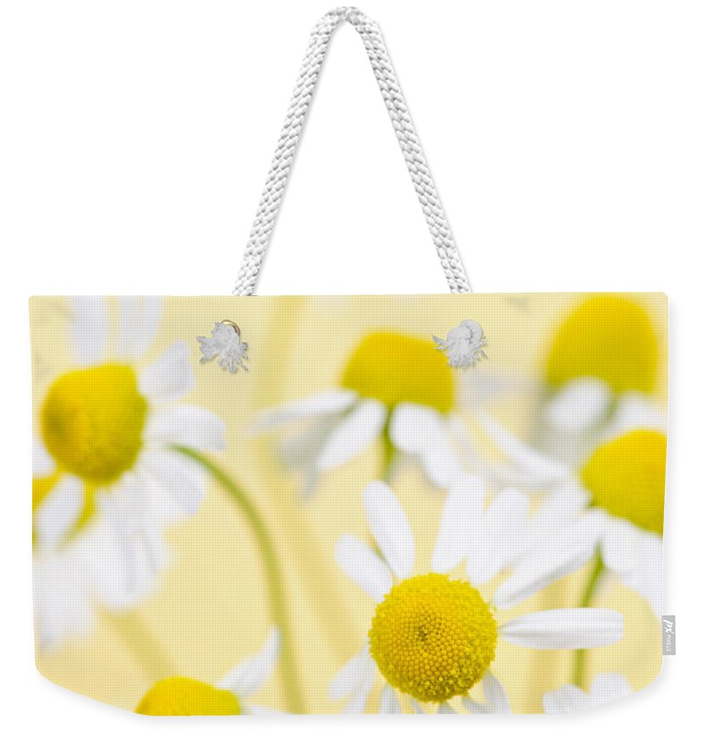 Chamomile Weekender Tote Bag featuring the photograph Chamomile Flowers Close Up by Elena Elisseeva