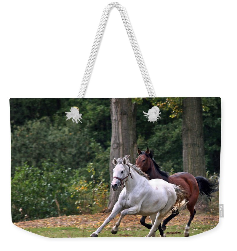 Horse Weekender Tote Bag featuring the photograph Chasing The Wind by Angel Ciesniarska