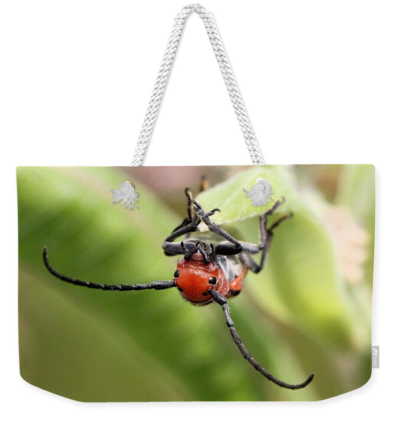 Red Milkweed Beetle Weekender Tote Bag featuring the photograph Checking Out The Photographer by Doris Potter