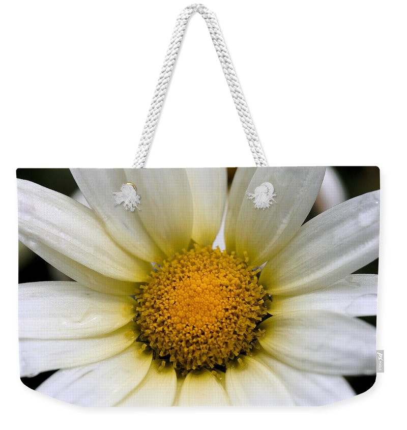 Flower Weekender Tote Bag featuring the photograph Cheery Daisy by Angela Rath