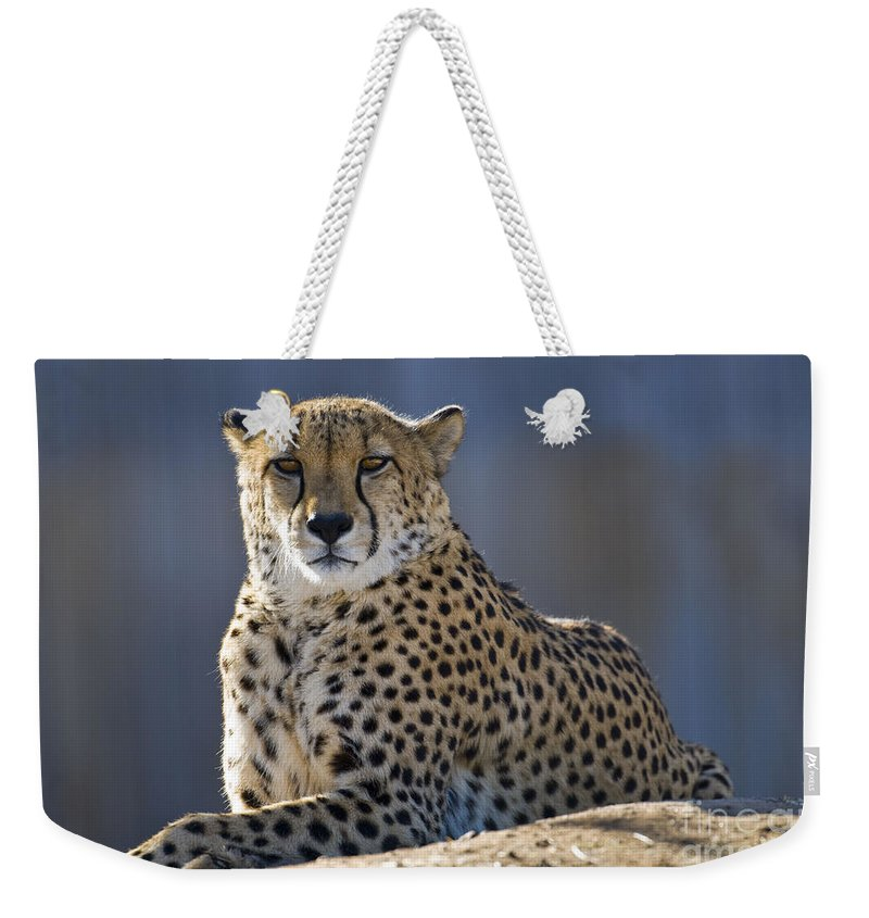 Animal Weekender Tote Bag featuring the photograph Cheetah by Juli Scalzi