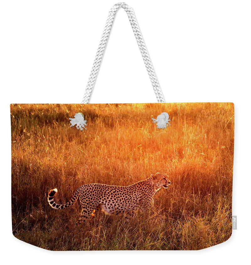 Scenics Weekender Tote Bag featuring the photograph Cheetah In The Grass At Sunrise by Mike Hill