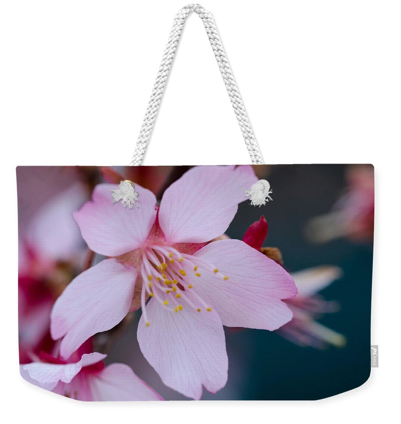 Cherry Blossom Weekender Tote Bag featuring the photograph Cherry Blossom Special by Jennifer Stockman