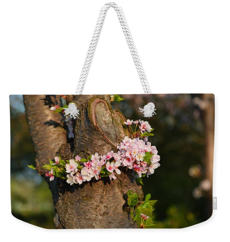 Architectural Weekender Tote Bag featuring the photograph Cherry Blossoms 2013 - 064 by Metro DC Photography