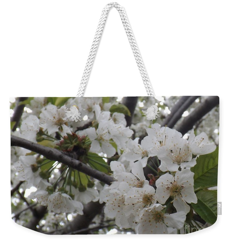 Cherry Weekender Tote Bag featuring the photograph Cherry Blossoms Branching Out by Brenda Brown