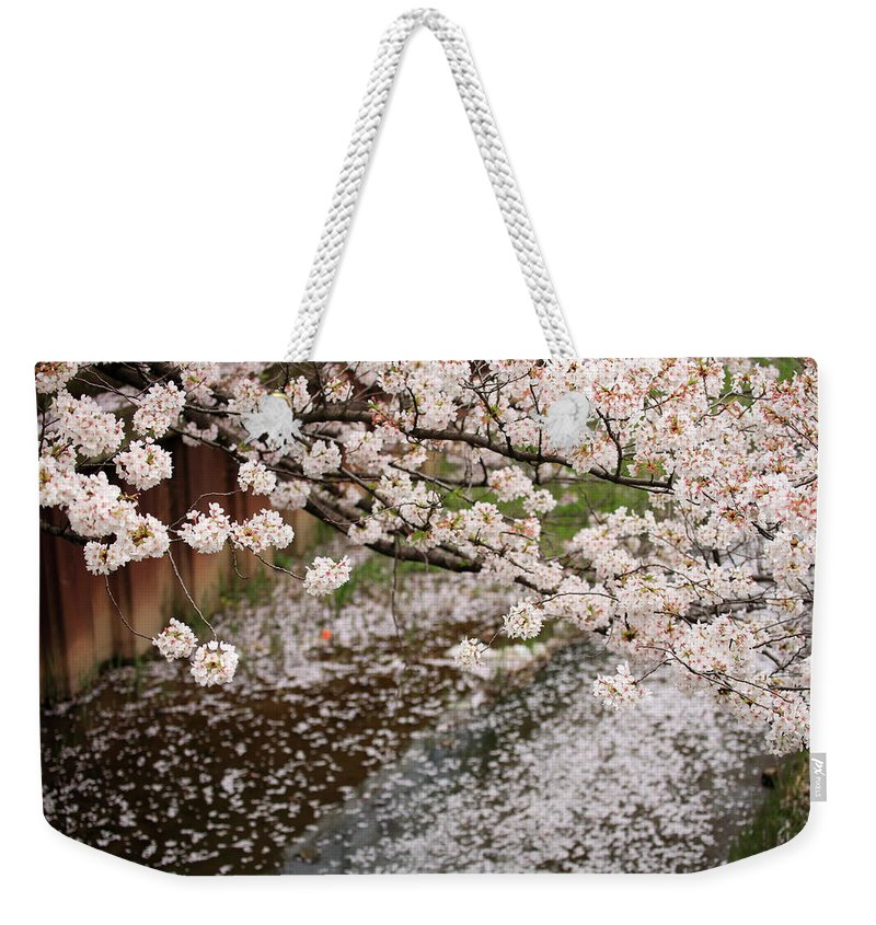 Season Weekender Tote Bag featuring the photograph Cherry Blossoms by Photography By Zhangxun