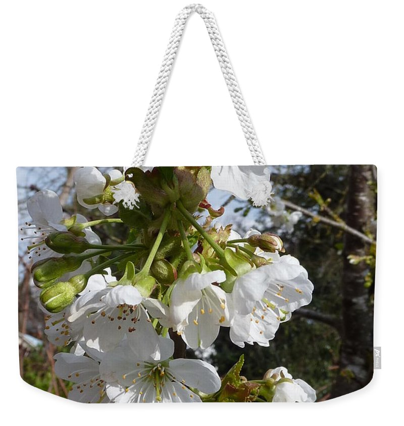 Cherry Blossoms Weekender Tote Bag featuring the photograph Cherry Blossoms by Rain Shine